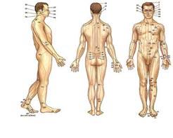 Maigrir avec l'acupuncture